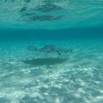 Nadar con Mantarrayas en Gran Caimán